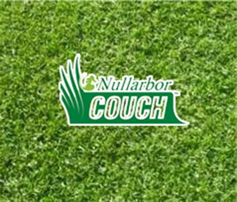 couch turf sydney which grass is right for me