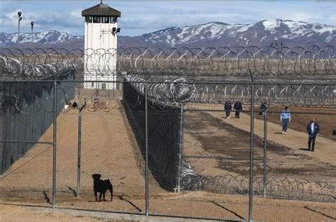 rottweiler puppies boise idaho dogs few escapes at idaho prison us news crime courts nbc news