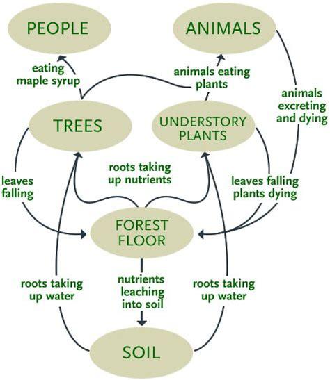 ecosystem diagram the world s catalog of ideas