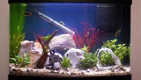 Types Of Bowl Betta Fish Tank Heaters ? HOUSE PHOTOS