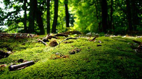 wallpaper desktop background nature nature wallpapers 1366x768 183