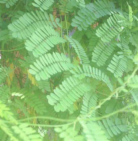 Herbal Daun Saga 301 Moved Permanently