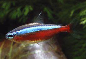 Tetra Test Ph By Jo Aquarium pontylazacok