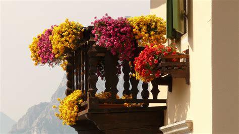 terrazzi fioriti balconi e terrazzi fioriti corsi gratuiti