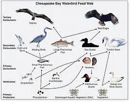 food chain wikipedia