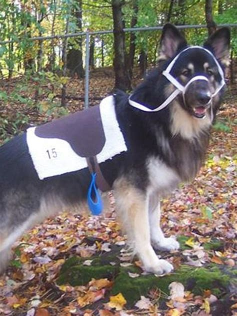dogs   dressing    horse  halloween