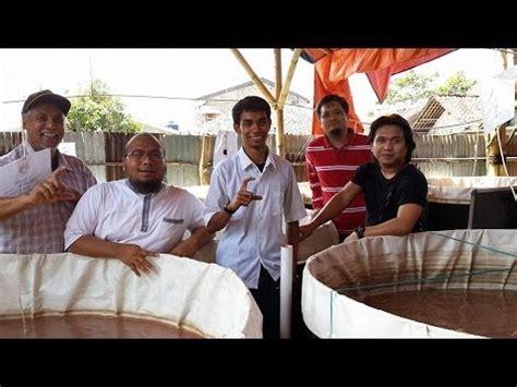 Bibit Lele Sangkuriang Jakarta pelatihan budidaya lele sangkuriang kolam terpal di