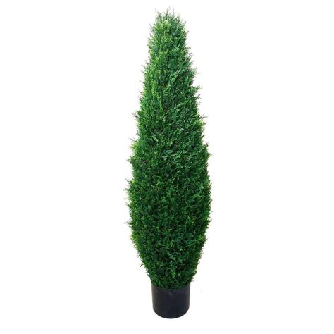 romano 3 5 ft cypress tree 50 10009 r the home depot