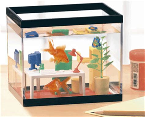 Office Fish Tank by Et Labor Working Behavior Of The Common Beta