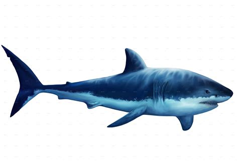 Decoration Home Games by Realistic White Shark Digital Illustration By Diangraphics