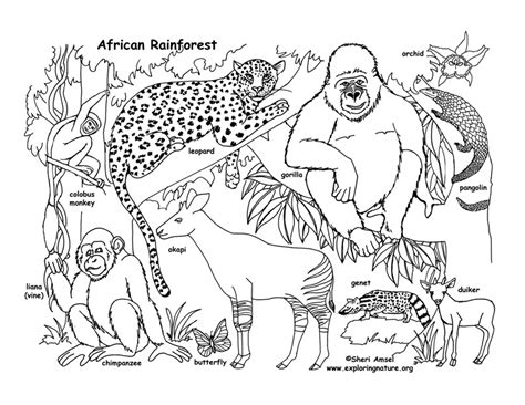 rainforest animals coloring pages habitats of the world activity