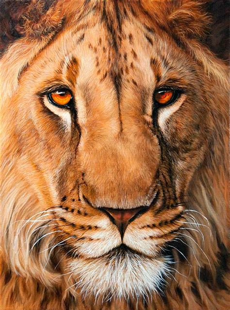 Lion Print | lion limited edition giclee prints