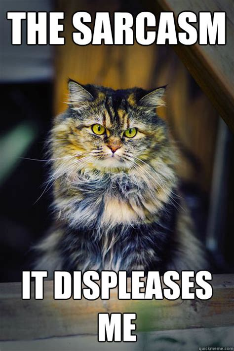 Sarcastic Cat Meme - displeased cat is displeased displeased cat quickmeme