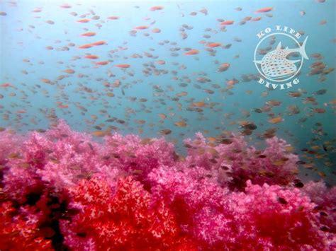 dive koh lipe diving koh lipe thailand ko lipe diving