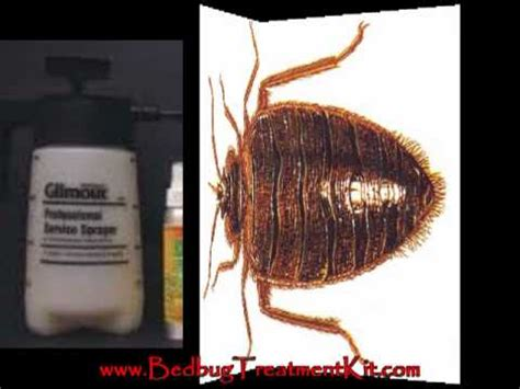 bed bugs treatment products bed bug bite treatment youtube