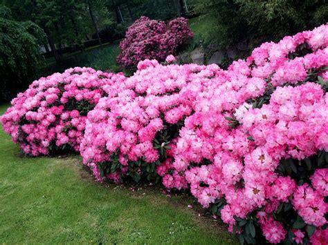 Marvelous Serre De Jardin De Qualite #10: Jardin_dornement_BOURGES.jpg
