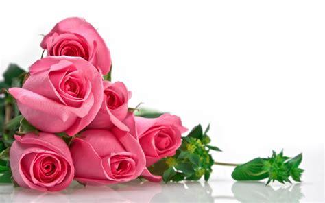 imagenes impresionantes de rosas rosas de color rosa fondos de pantalla rosas de color