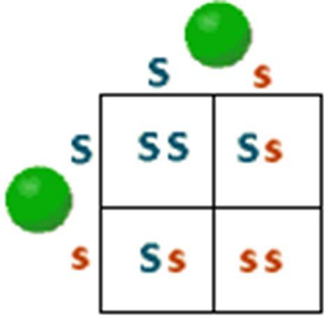 Monohybrid Cross Problem Set F1 Generation Punnett Square
