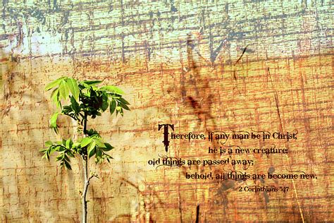 scripture tree scripture tree photograph by charrie shockey