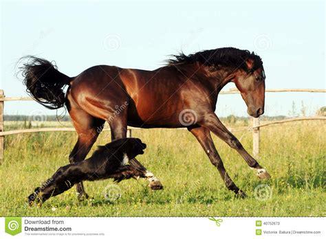 ukrainian horse breed horses stock photo image 40752673