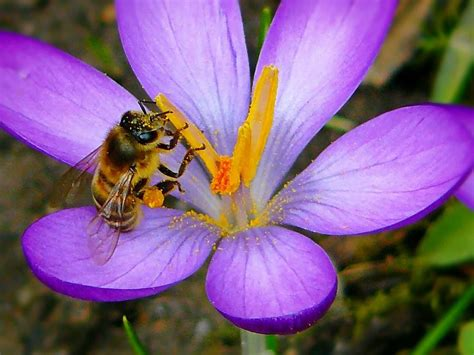 picture summer bee flora insect pollen nature