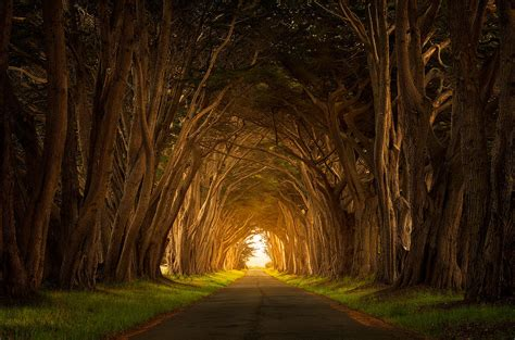 The Light At The End Of The Tunnel by The Light At The End Of The Tunnel Astro Tarology