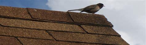 useful alternative to felt for shed roof mak