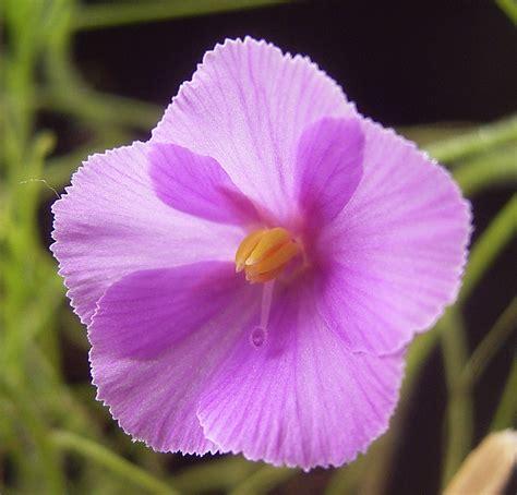 download film dokumenter flora dan fauna contoh gambar flora fauna contoh soal2
