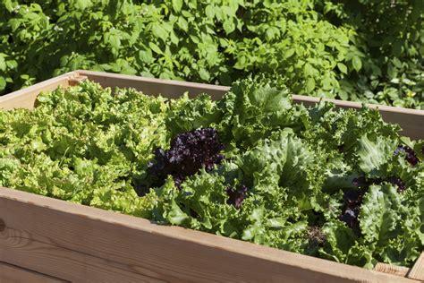 gardening kisten und co als alternativer garten