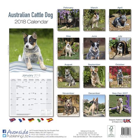 2018 cow dogs calendar stoecklein photography australian cattle dog calendar 2018 pet prints inc