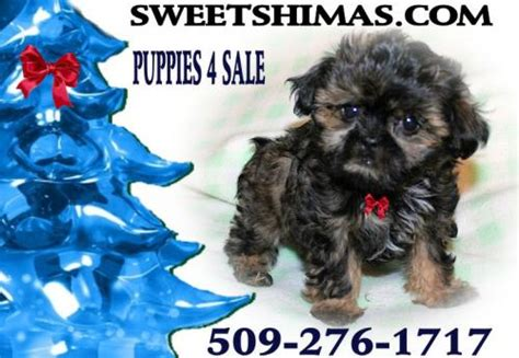 puppies for sale spokane spokane for sale puppies for sale