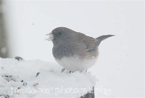 northern illinois birder first snowfall of the season