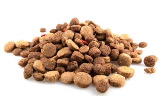 dog food recipes about homemade dog treats
