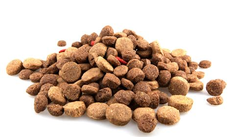 puppy food food recipes about treats