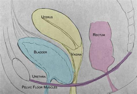 Prolapsed Bladder Symptoms Cystocele | pelvic health and alignment pelvic organ prolapse part 1