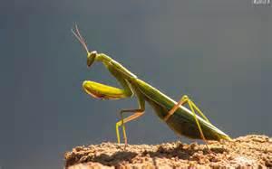 d 233 finition gt insecte