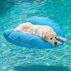 Pizza Kitchen Design Dog Pool Float The Green Head