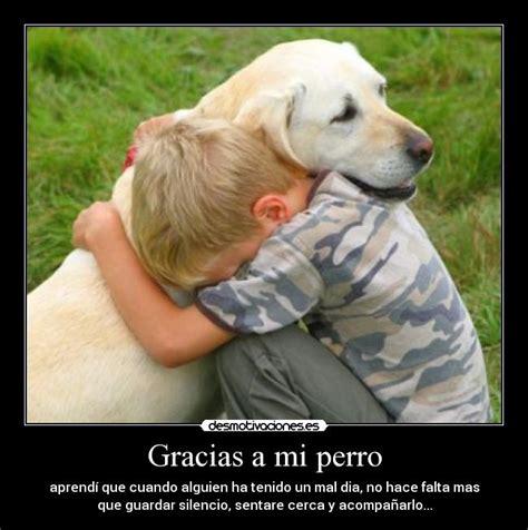 mi gato mi perro 1623957575 gracias a mi perro desmotivaciones