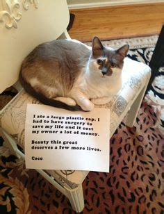 ate plastic shaming on cat shaming shaming and pet dogs