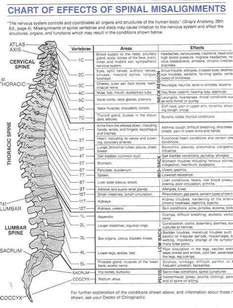 back nerve diagram spinal misalignments chart