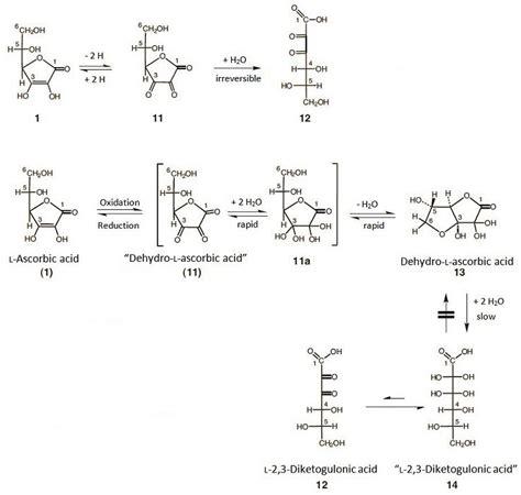 L Mechanism by Oxidation Of Ascorbic Acid Related Keywords Oxidation Of Ascorbic Acid Keywords