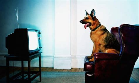can dogs see tv can dogs tv when fido has a favorite show