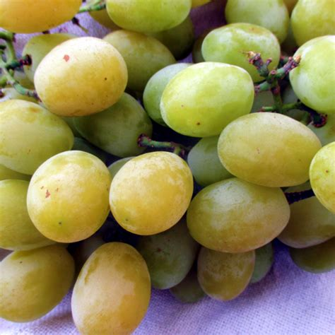 my ate one grape where to buy cotton grapes 2015 eat like no one else