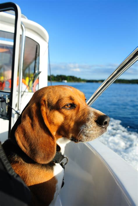nboat blog boat insurance marine insurance boat - Dog On Boat Quotes