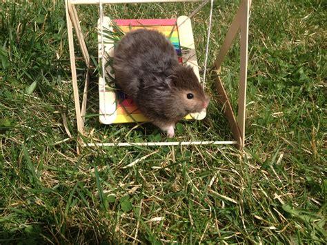 hamster swing diy hamster swing trusper