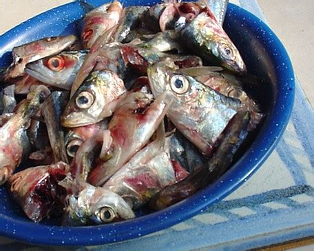 Will You Eat Fish With The Heads Still On by Sardines Letters