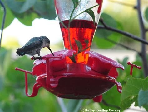 best 28 when should i take my hummingbird feeder 1000