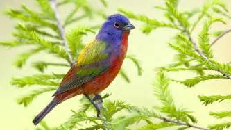 colored birds bird background wallpapers9