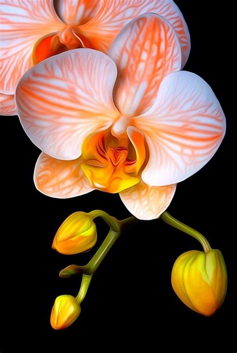 imagenes de flores asombrosas las 25 mejores ideas sobre flores ex 243 ticas en pinterest