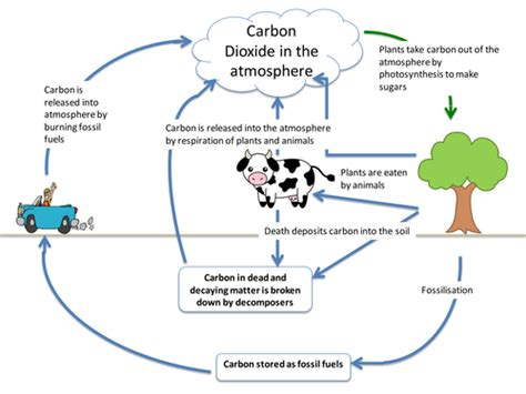 carbon cycle diagram worksheet carbon cycle by itegallagher teaching resources tes